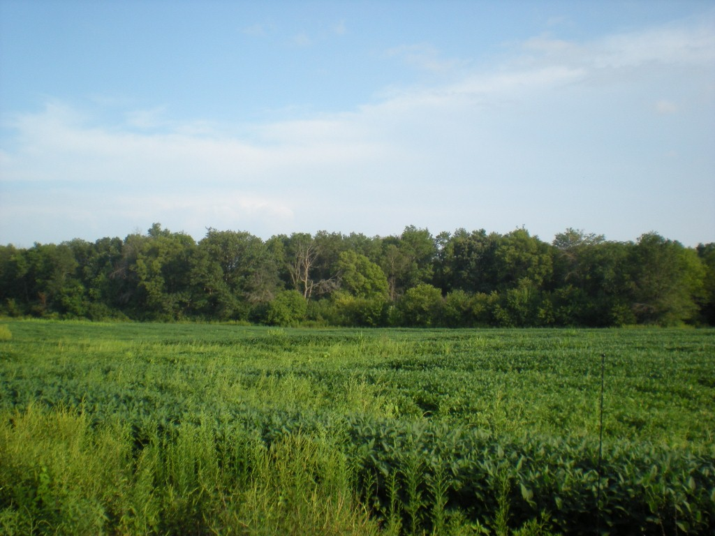 35 Acre Highway 161, Bowling Green, Missouri 63334